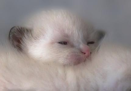 Katzenkinder-auf-der-Wiese-6