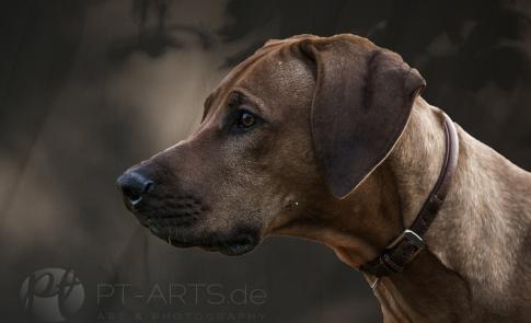 Collage Hundefotografie Petra Taenzer in Stuttgart