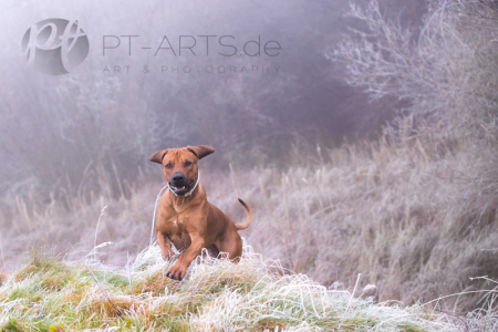 KPetra Tänzer Hundefotografie Kenai  , der Familienhundenai-im-Winter-(2-von-4)web
