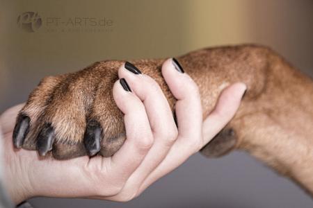 Petra Tänzer Hundefotografie Kenai  , der FamilienhundKenai-im-Winter-(9-von-13a)web