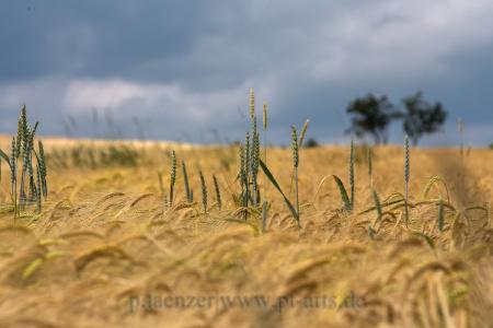 Landschaftsfotografie-Schwäbischer-Wald2