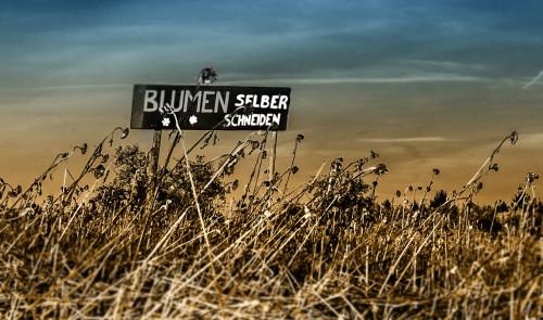 Haube bei Lutzenberg und Mannenberg