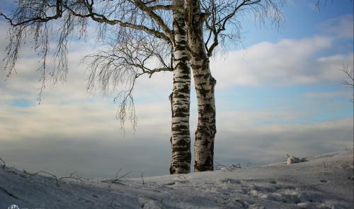 Waldenweiler im Schwäbischen Wald