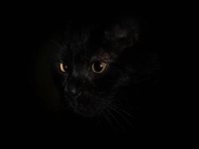 Schwarzer-Kater-mit-schwarzem-Hintergrund