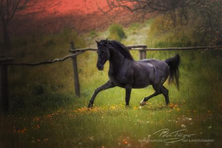 #pferde #trab #pre #sommer #koppel