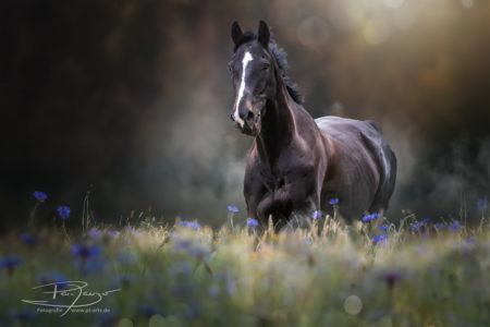 #pferde #galopp #warmblut #sommerr #koppel