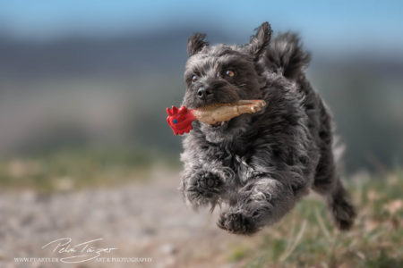 pt-arts-petra-taenzer-fotografie-tierfotografie-hunde-action-frühling 19