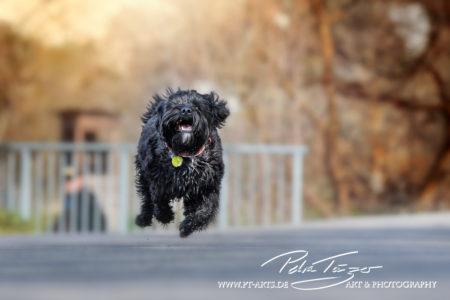 pt-arts-petra-taenzer-fotografie-tierfotografie-hunde-action-frühling 6