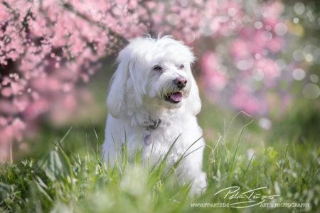 pt-arts-petra-taenzer-fotografie-tierfotografie-hunde-porträt-frühling 1