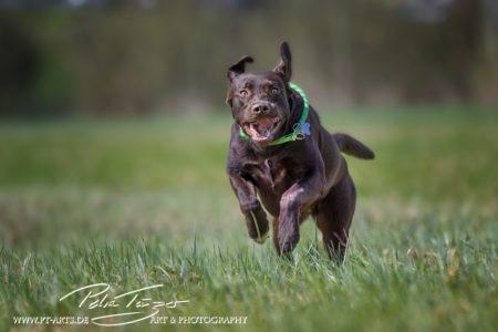 pt-arts-petra-taenzer-fotografie-tierfotografie-hunde-action-frühling 7