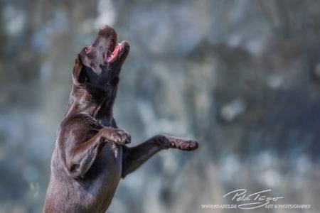 pt-arts-petra-taenzer-fotografie-tierfotografie-hunde-action-frühling 16