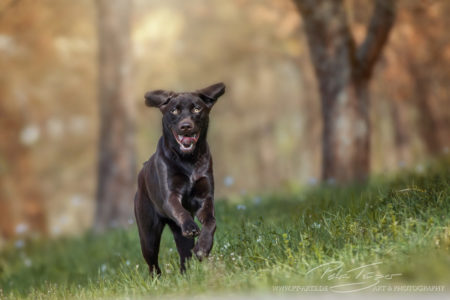 pt-arts-petra-taenzer-fotografie-tierfotografie-hunde-action-frühling 15