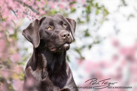 pt-arts-petra-taenzer-fotografie-tierfotografie-hunde-porträt-frühling 17