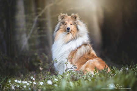 pt-arts-petra-taenzer-fotografie-tierfotografie-hunde-porträt-frühling 12