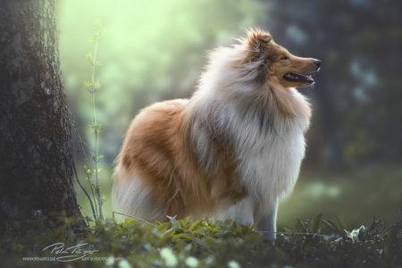 pt-arts-petra-taenzer-fotografie-tierfotografie-hunde-porträt-frühling 10