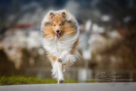 pt-arts-petra-taenzer-fotografie-tierfotografie-hunde-action-frühling 11