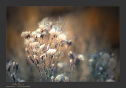 WEB Blumen im Juli 0025 a – Kopie