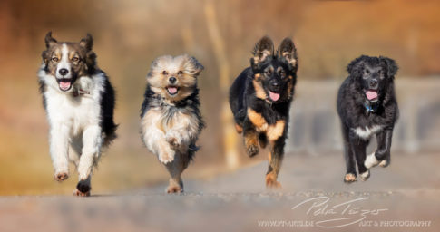 pt-arts-petra-taenzer-fotografie-tierfotografie-hunde-action-frühling 2