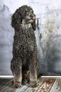 pt-arts-petra-taenzer-fotografie-tierfotografie-hunde-porträt 41