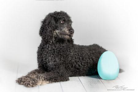 pt-arts-petra-taenzer-fotografie-tierfotografie-hunde-porträt 40
