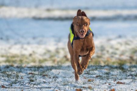 pt-arts-petra-taenzer-fotografie-tierfotografie-hunde-action-frühling 21