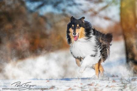 pt-arts-petra-taenzer-fotografie-tierfotografie-hunde-action-frühling 22