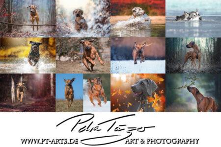 WEB hp Collage Hunde – Kopie