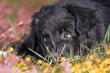 pt-arts-petra-taenzer-fotografie-tierfotografie-hunde-porträt 34