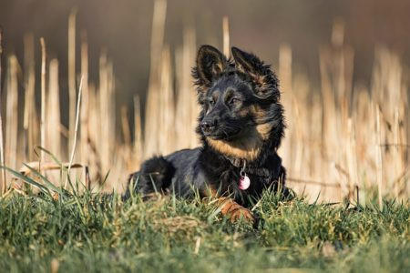 pt-arts-petra-taenzer-fotografie-tierfotografie-hunde-porträt 32