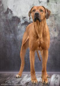 pt-arts-petra-taenzer-fotografie-tierfotografie-hunde-porträt 42