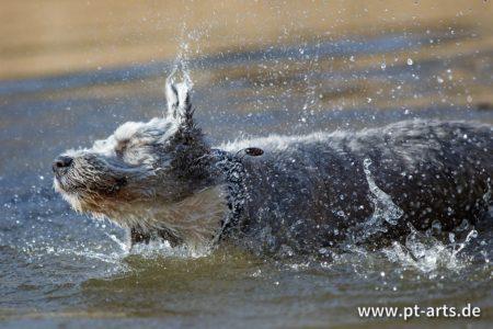 pt-arts-petra-taenzer-fotografie-tierfotografie-hunde-action-frühling 8