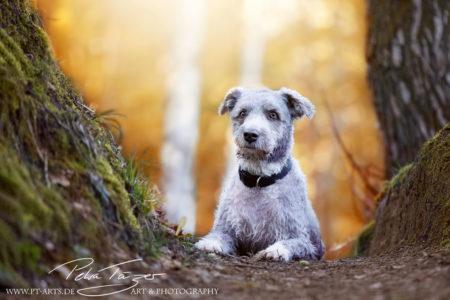 pt-arts-petra-taenzer-fotografie-tierfotografie-hunde-porträt-frühling 9