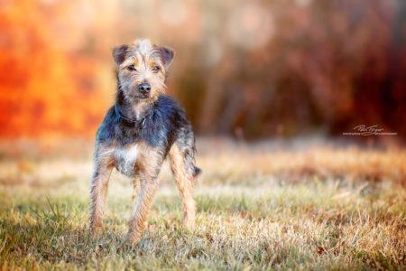 pt-arts-petra-taenzer-fotografie-tierfotografie-hunde-porträt-herbstlook