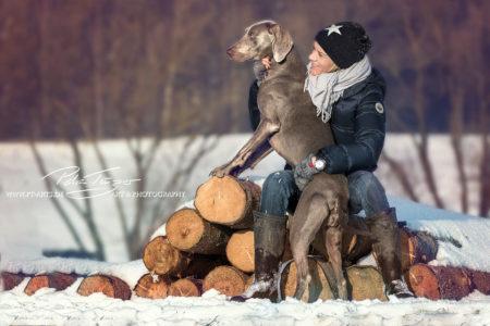 pt-arts-petra-taenzer-fotografie-tierfotografie-hunde-winter-weimaraner 04