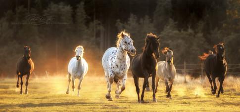 Pferde auf der Herbstkoppe