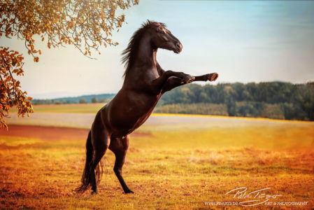 #pferde #steigend #welsh #herbst #koppel