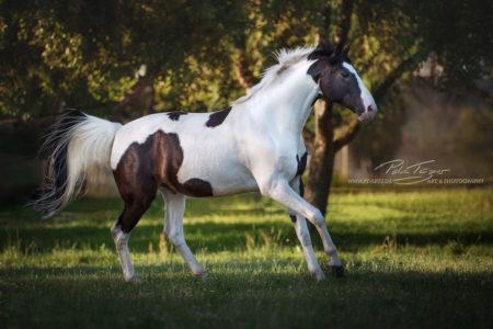 #pferde #schecke #sommer #wiese
