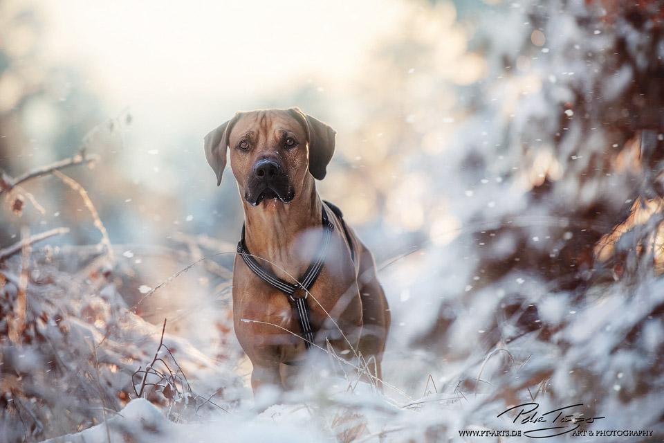 Unser Hund Kenai